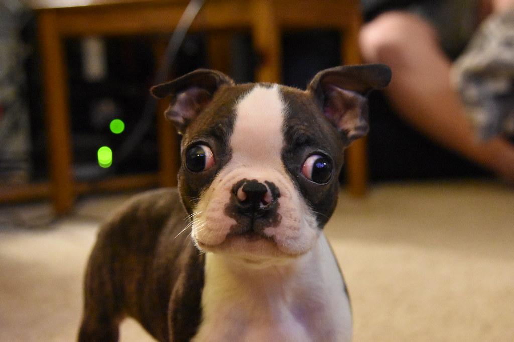 doorfokt hondje